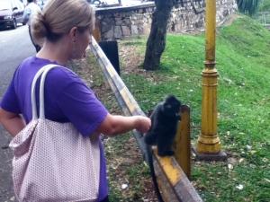 Rorey Feeding the Monkeys